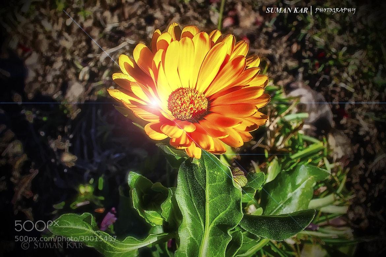 Photograph Lights on petals by Suman Kar on 500px