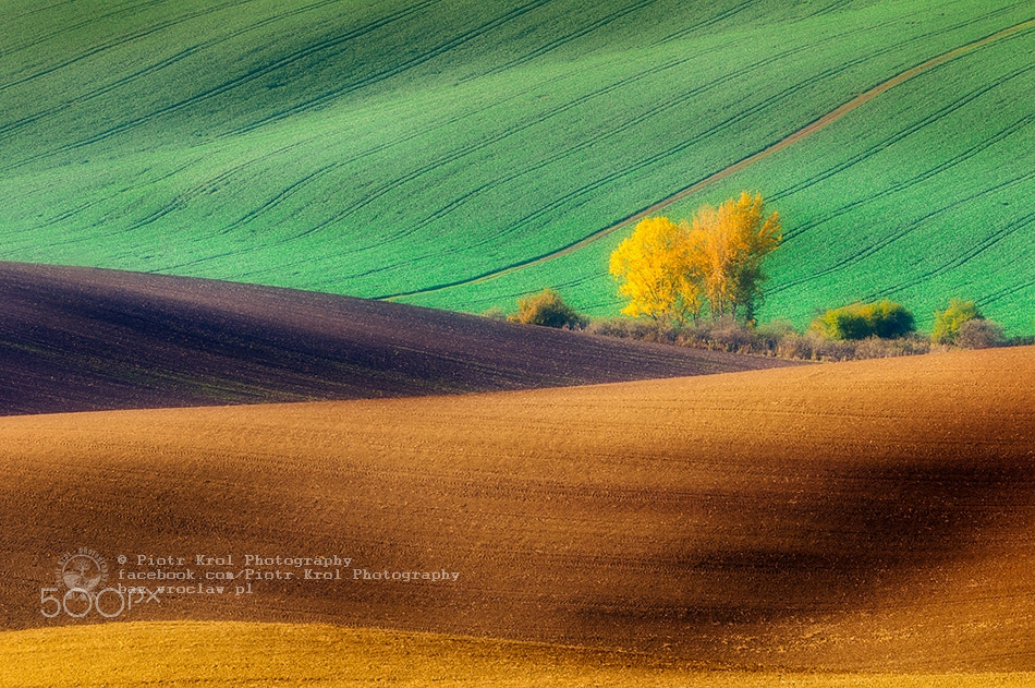 Photograph Autumn fields by Piotr Krol on 500px