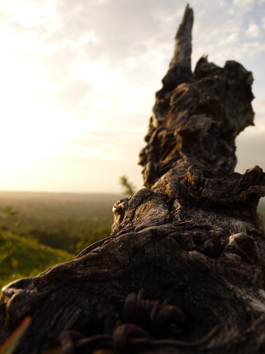 Photograph A Simple Dead Trunk by Johnny Flores Ferreto on 500px