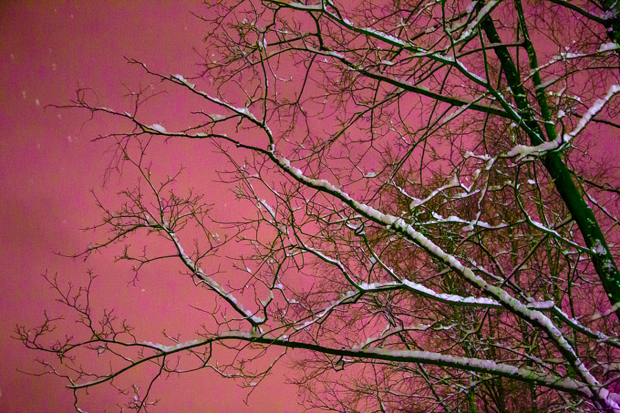 Ветки на небе by Alexey Filippov on 500px.com
