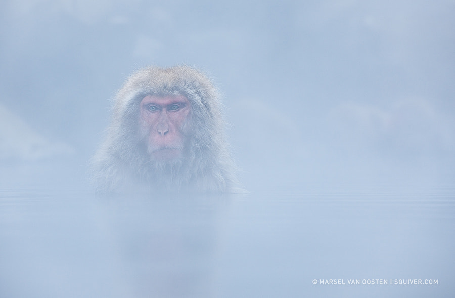 Steamy Bath by Marsel van Oosten on 500px.com