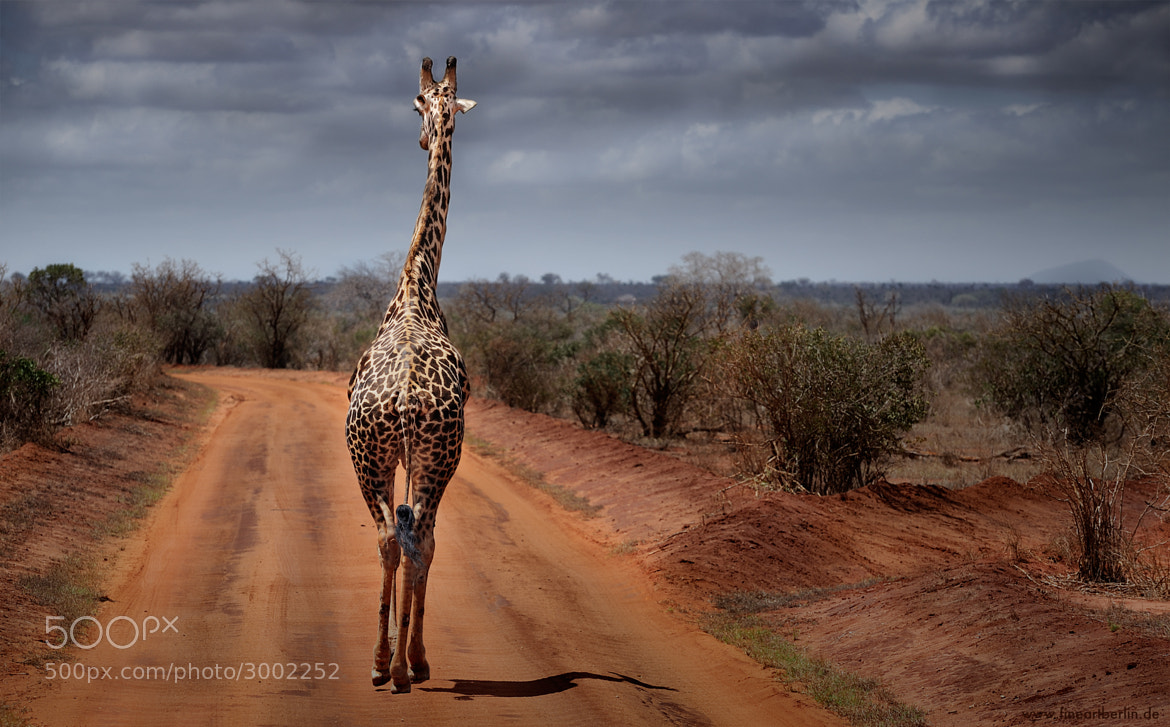 Photograph Back Of Africa by Cecilia Zawadzki on 500px