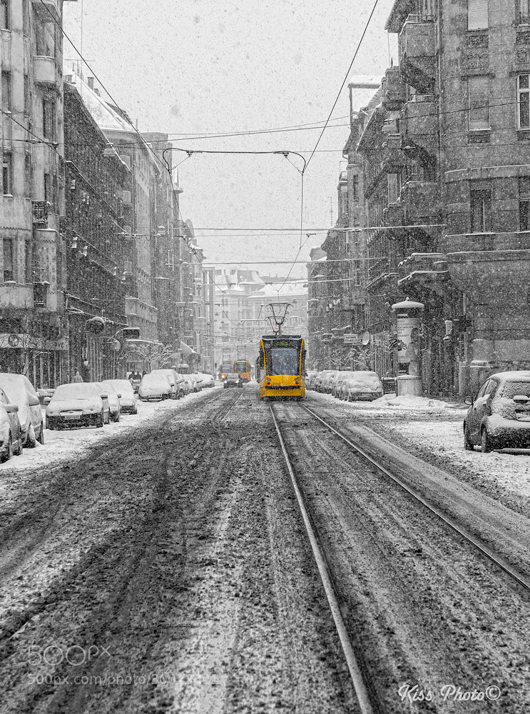 Photograph Morning snow by Tamás Kiss on 500px
