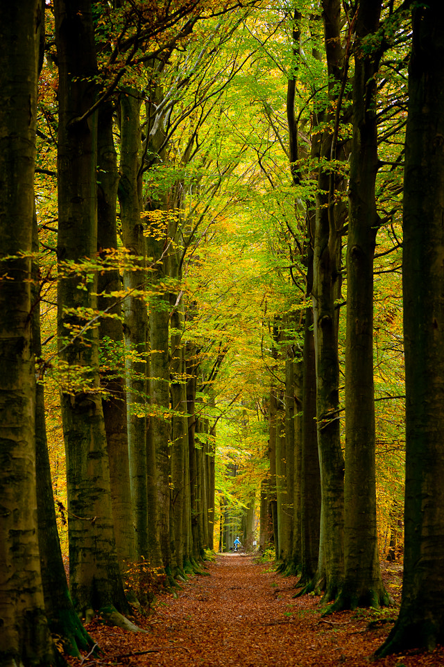 Photograph Fall by Roeland Van de Velde on 500px