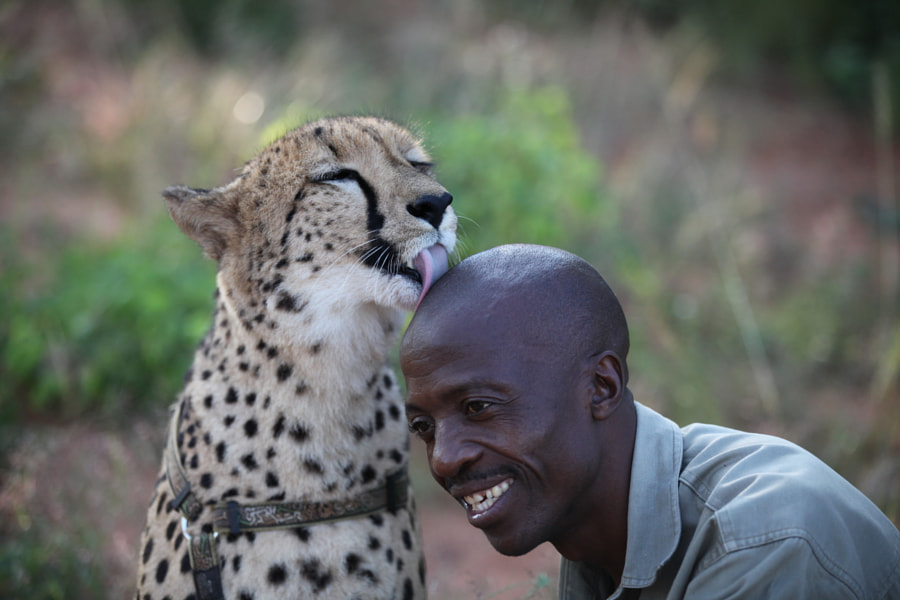 Photograph A cheetah and his friend by Kenneth Pedersen on 500px