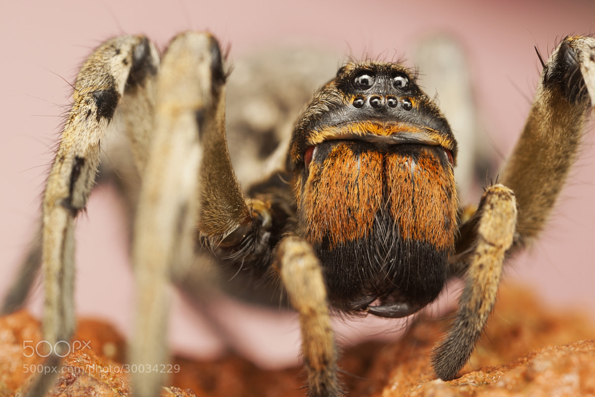 Photograph MiniSpider by Ömer Alp Evirgen on 500px