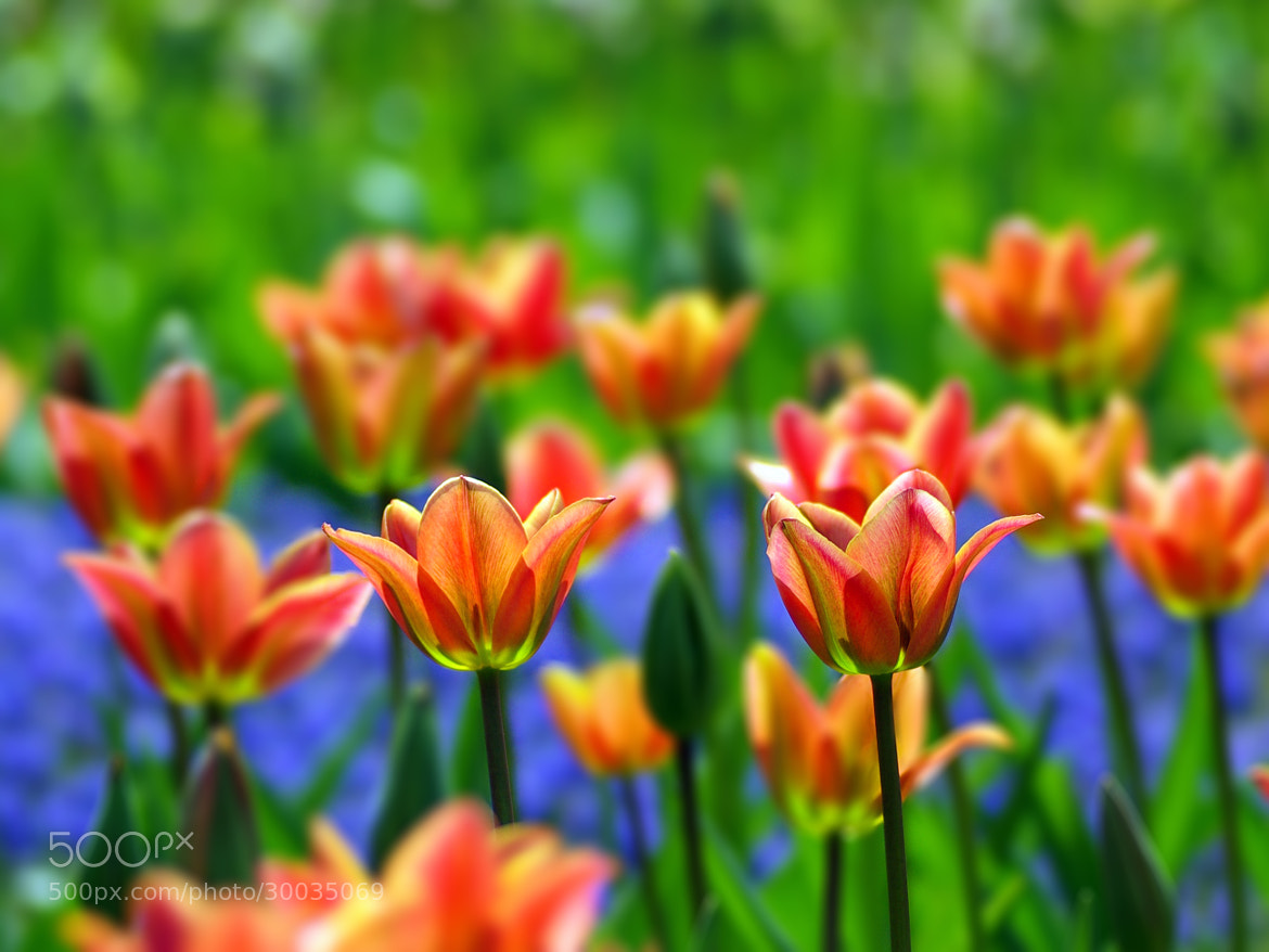 Photograph Spring by Bogdan's travel clicks on 500px
