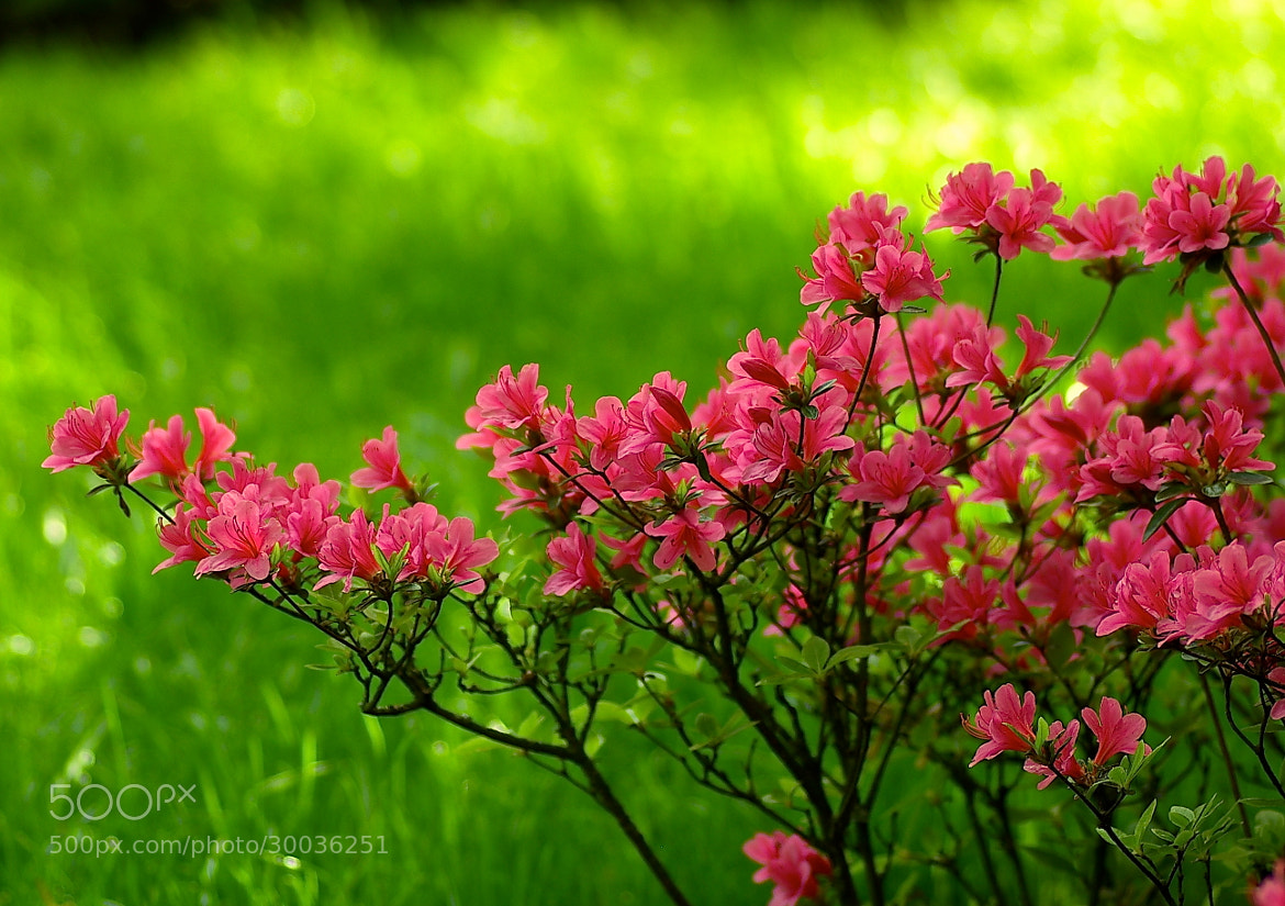 Photograph Spring blossoms by Bogdan's travel clicks on 500px