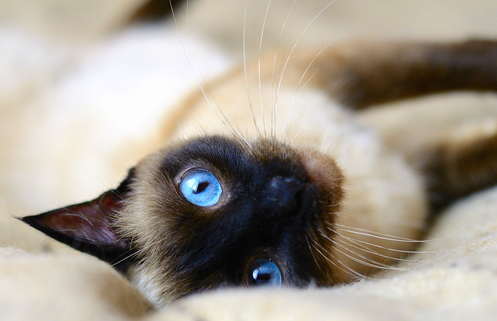Photograph Blue eyes by derevnja on 500px