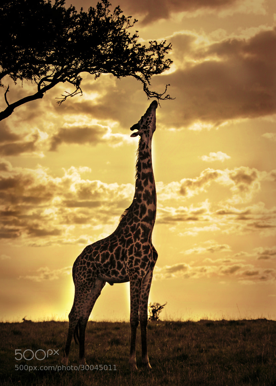 Photograph Masai Mara by 5200 Kelvin on 500px