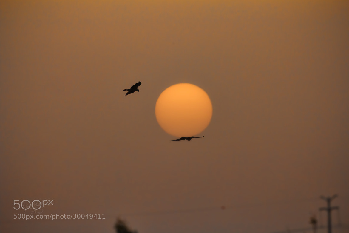 Photograph Carry the sun by Ariel Patish on 500px