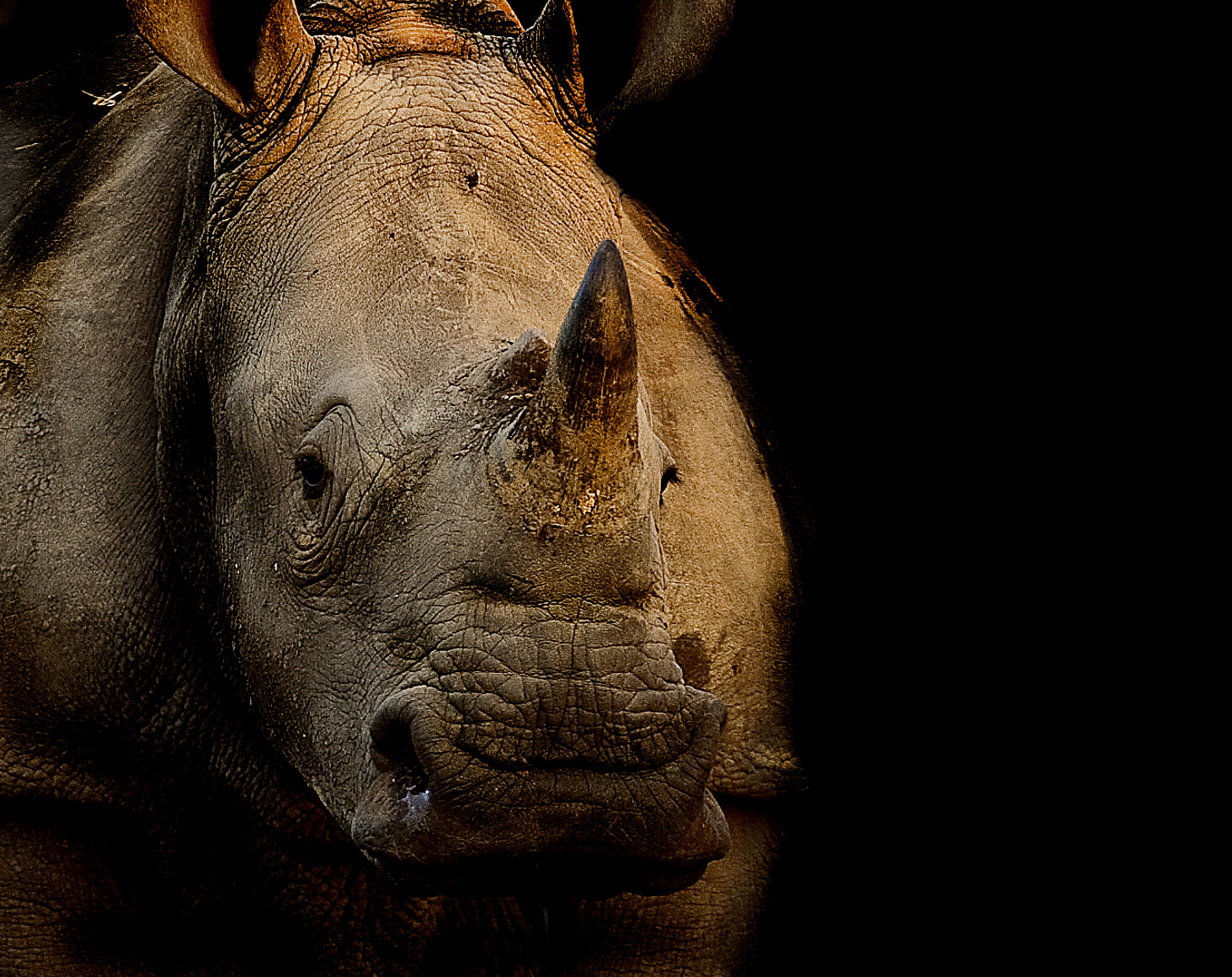 Photograph White Rhino by 5200 Kelvin on 500px