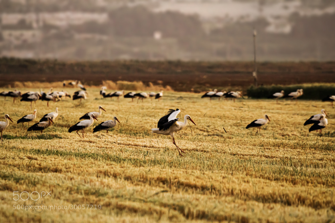 Photograph Different stork by Ariel Patish on 500px