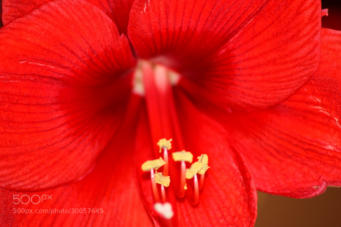 Photograph Flower by Michael   on 500px