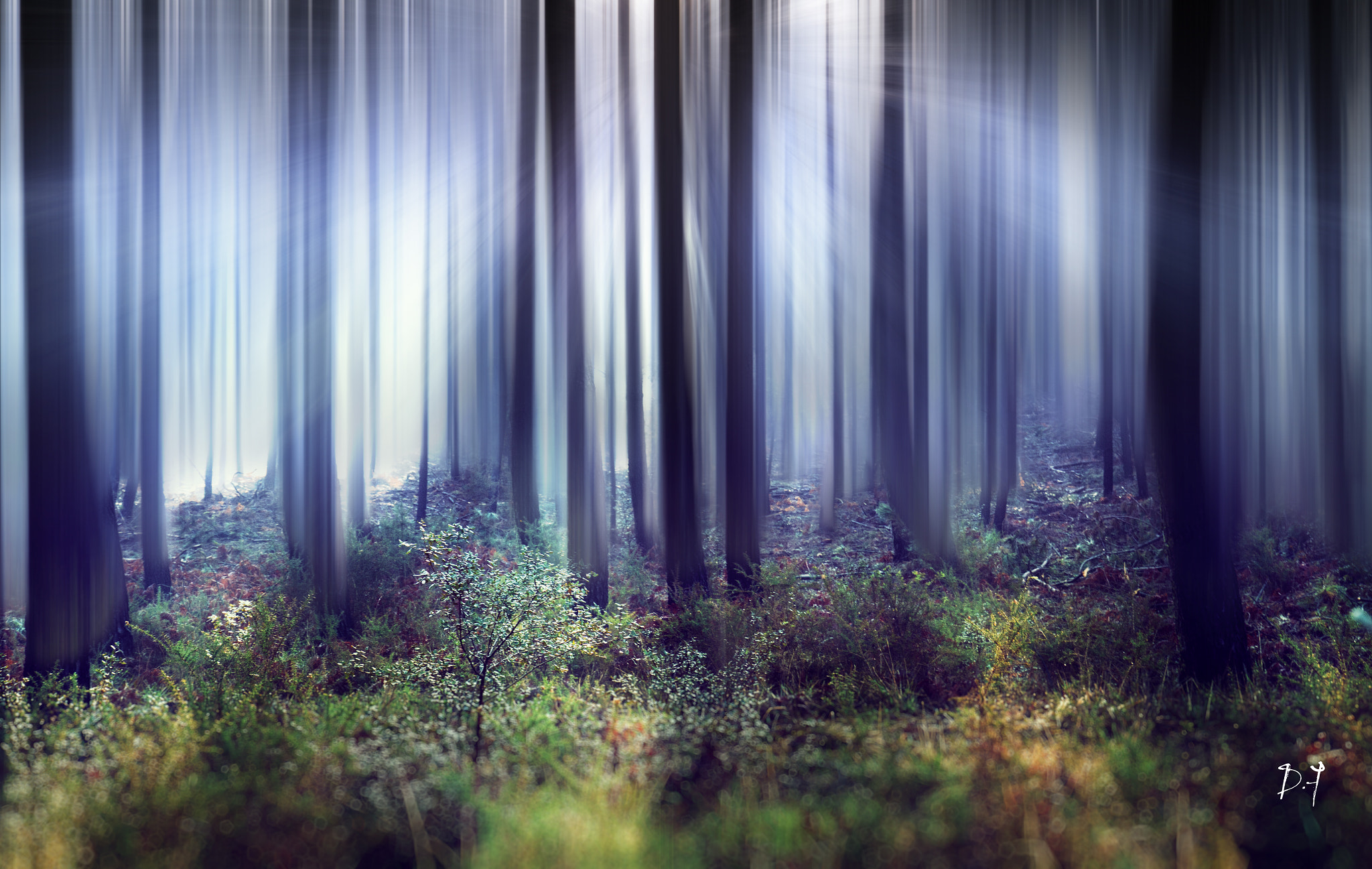 Photograph Light forest by dufau julien on 500px