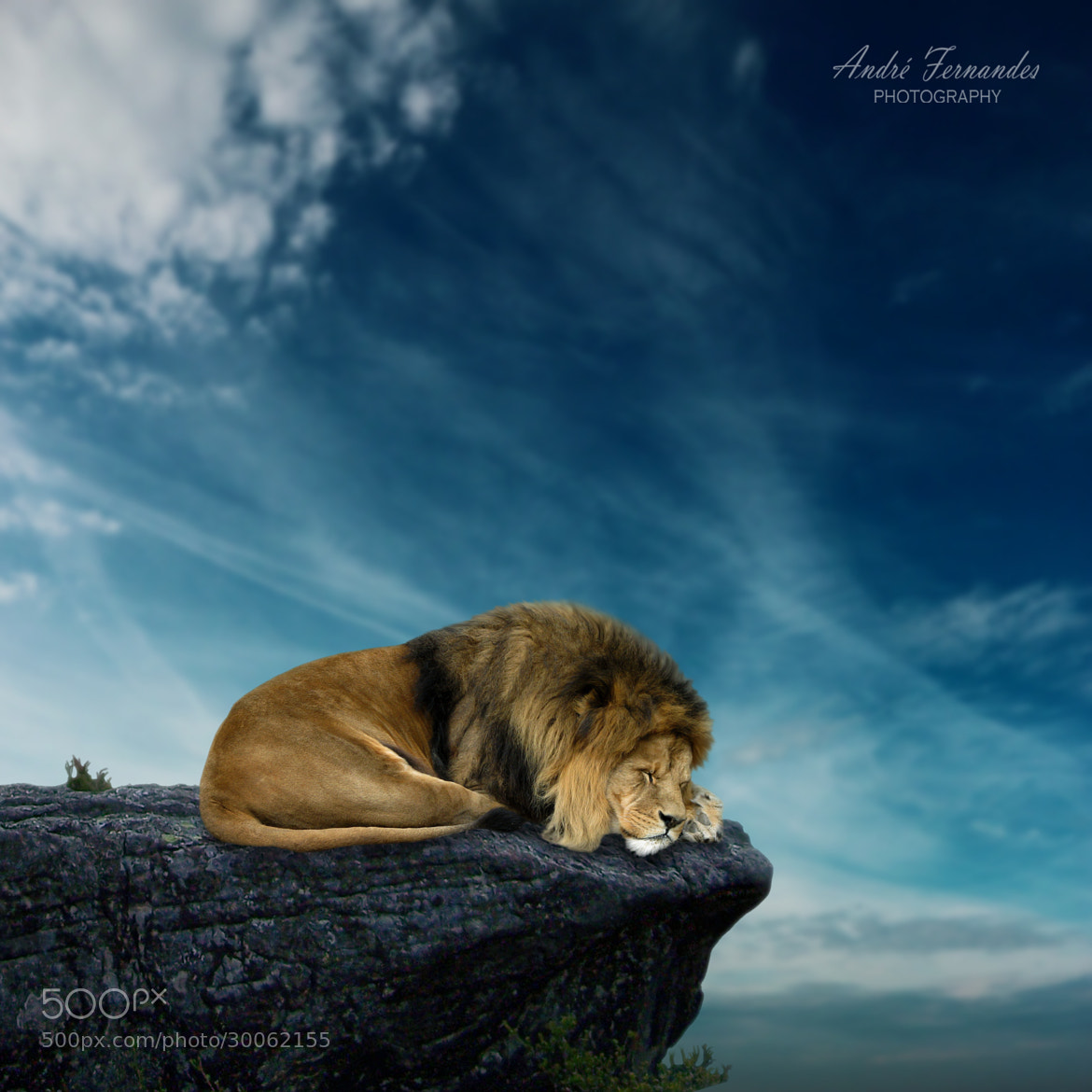 Photograph The Lion King by André Fernandes on 500px