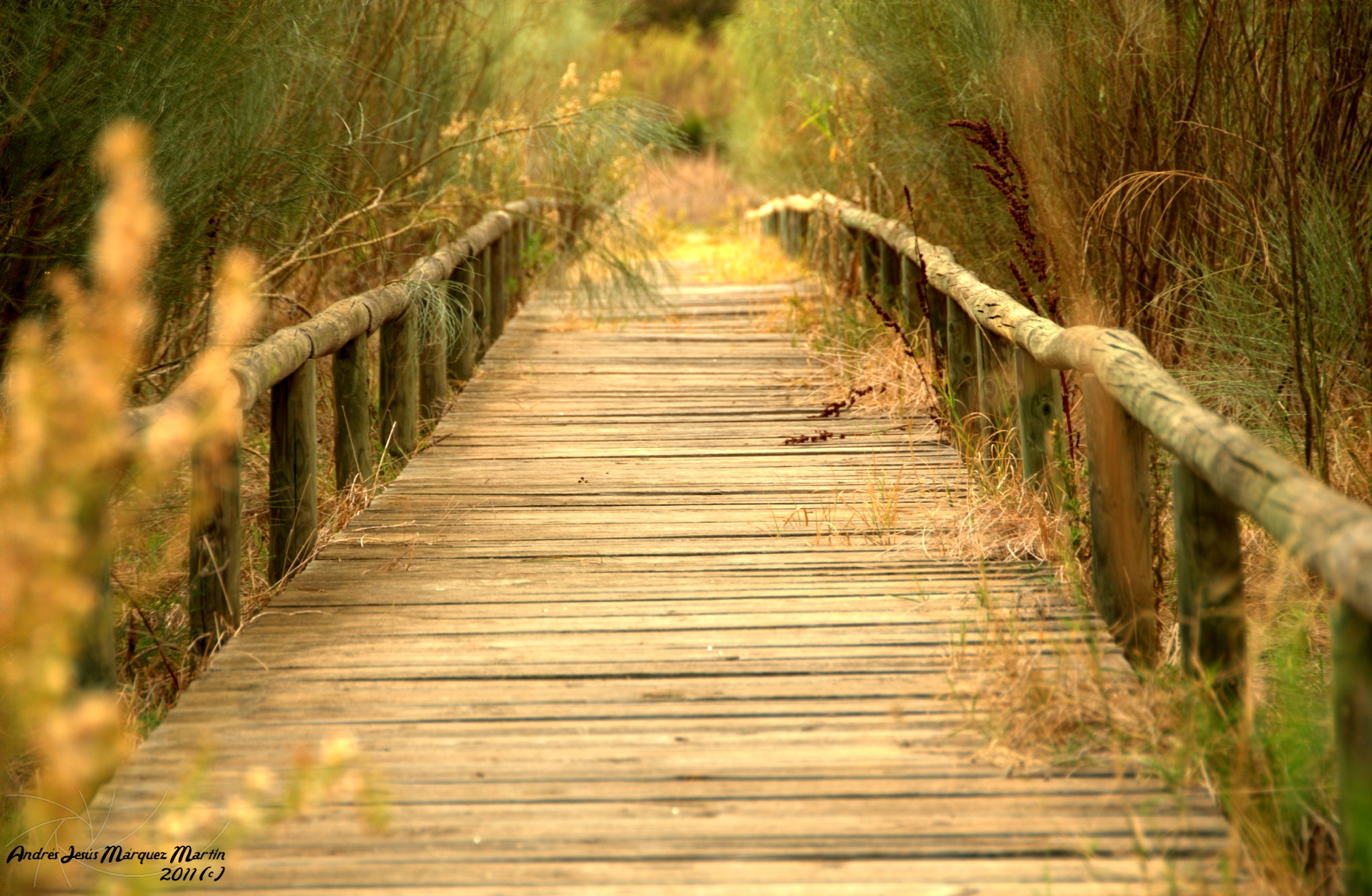 Photograph Boardwalk by Andrés J. Márquez on 500px