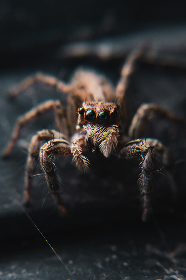 Loki the Spider by Kushal Singh on 500px.com