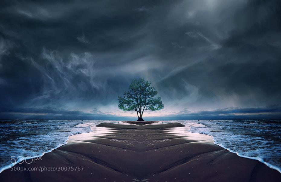 Photograph The tree of life... by Joanna Maciszka on 500px