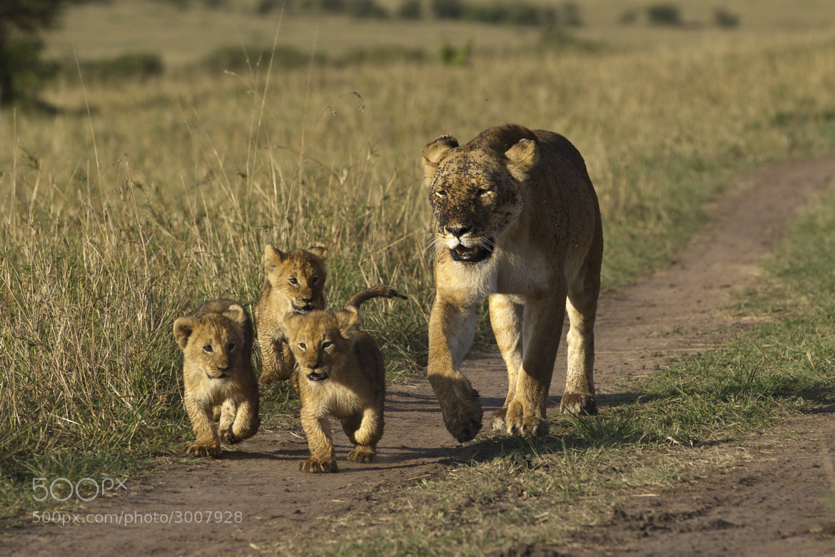 Photograph Bringing the Cubs to Dinner I by Mike Johnson on 500px