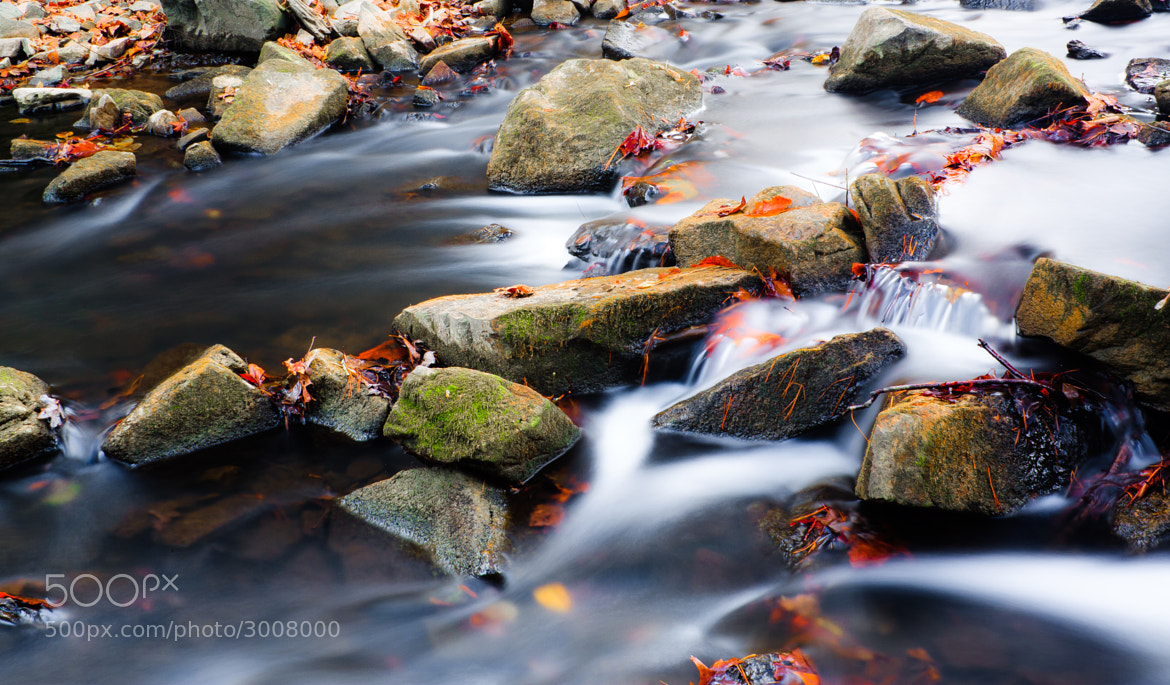Photograph Rocks and Leaves by Greg Booher on 500px