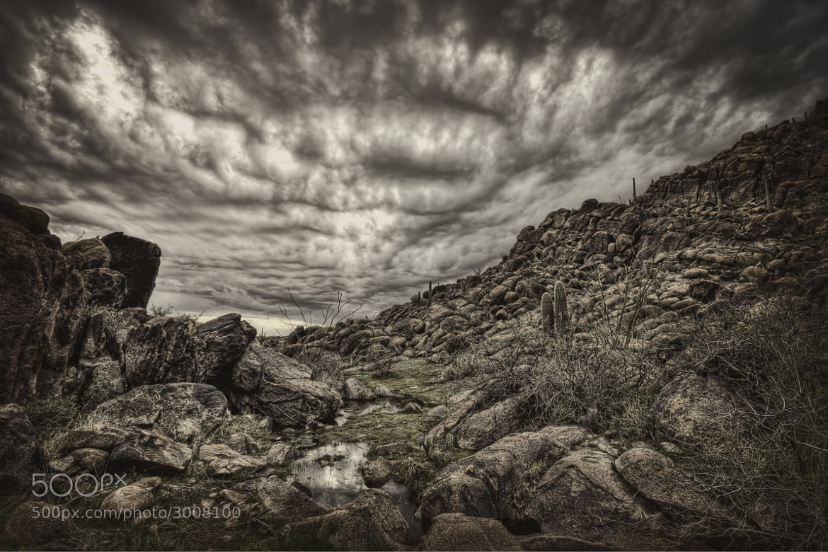Photograph The Eyes Watching the Forbidden Desert by Danilo Faria on 500px