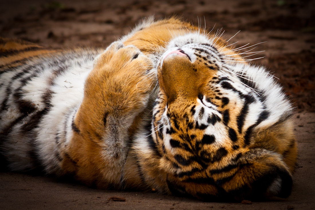 Photograph Purrrr... by Charles Davey on 500px