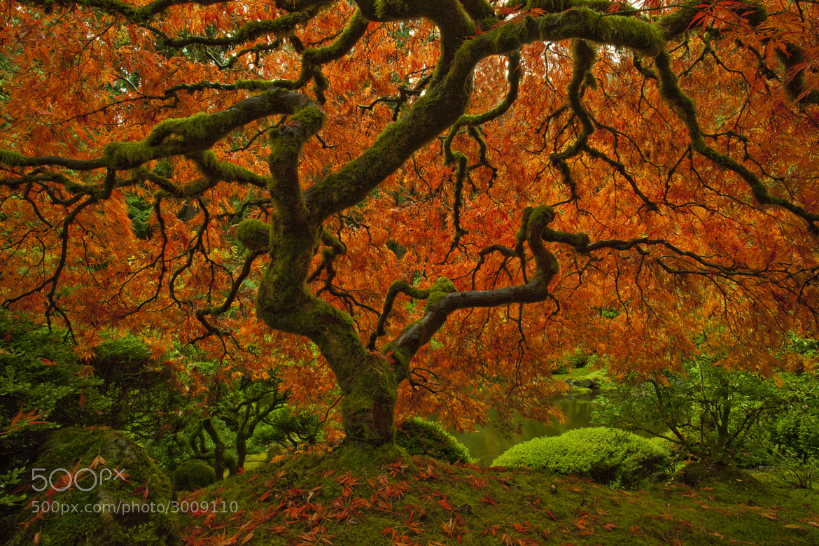 Photograph The Tree by Rich  Bitonti on 500px