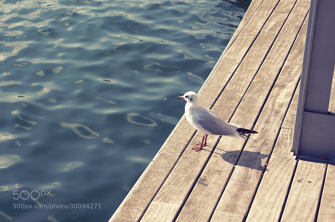 Photograph Seagul by Marco Antônio Pompei on 500px