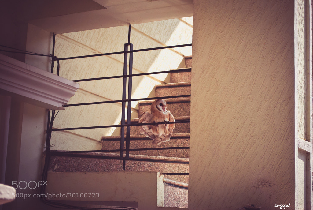 Photograph surprise visitor by ramgopal rajaram on 500px