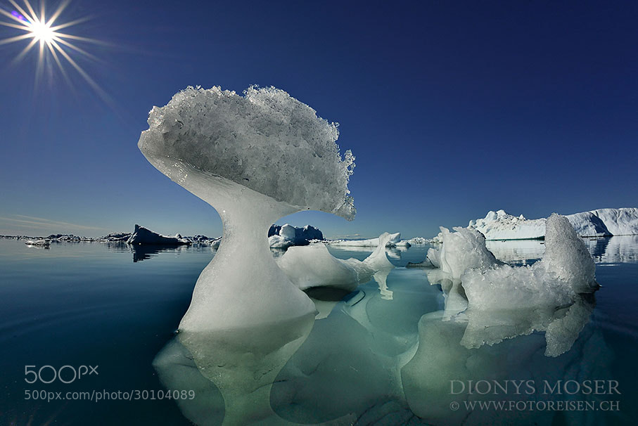 Photograph Mushroom ice by Dionys Moser on 500px