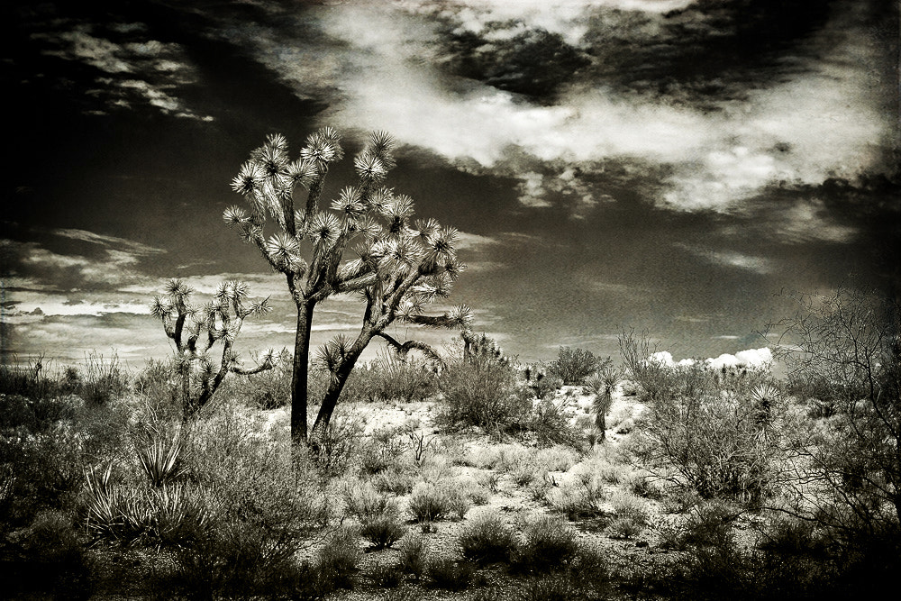 Photograph Desert Landscape by Paul Bartell on 500px