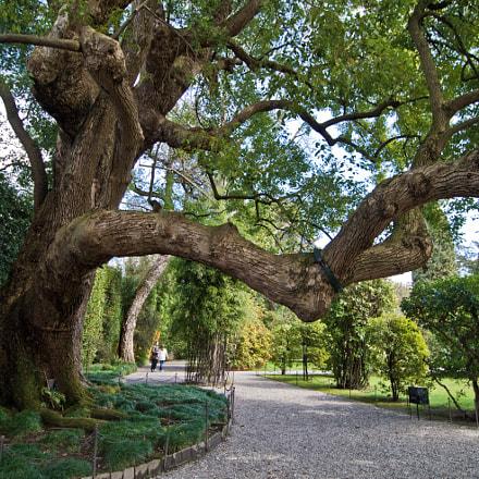 tree (01)
