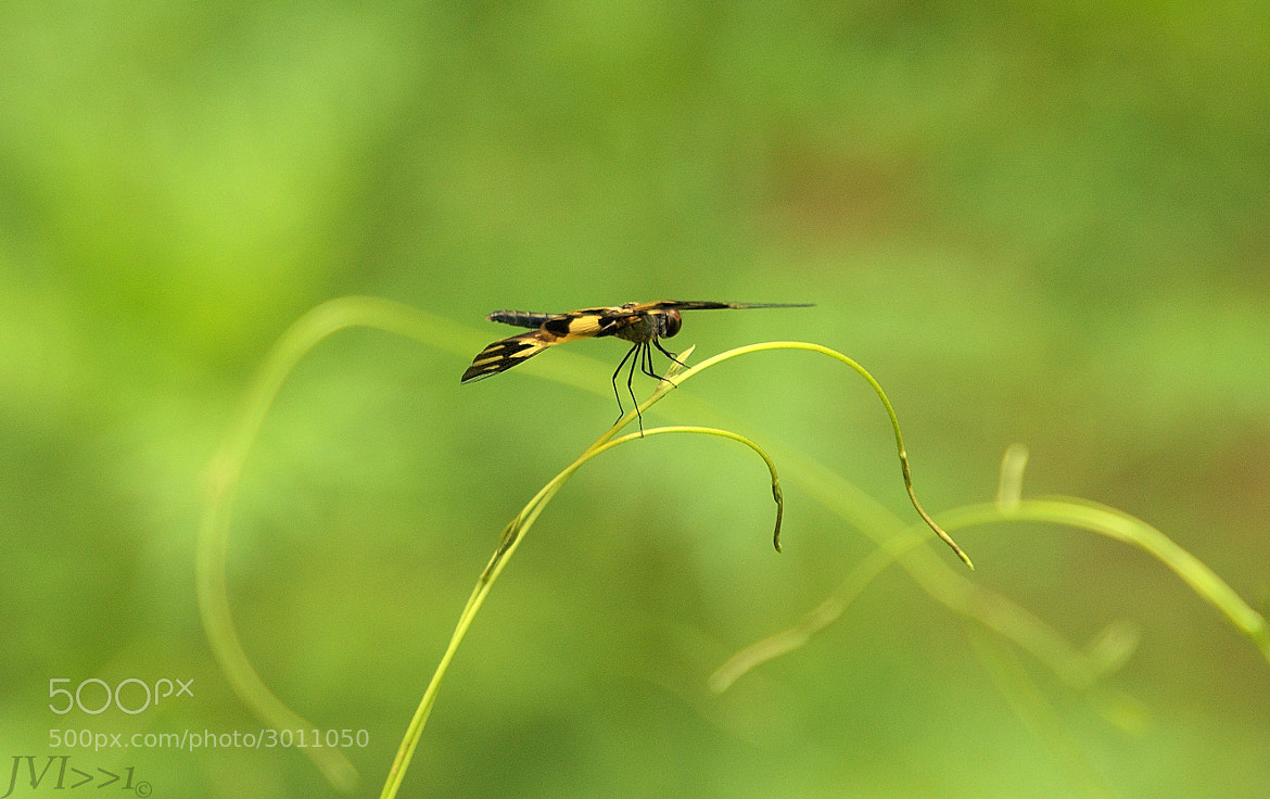Photograph Clutching by Jayakrishnan Iyer on 500px