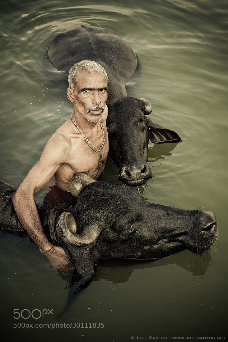 Photograph Embracing Buffalos by Joel Santos on 500px