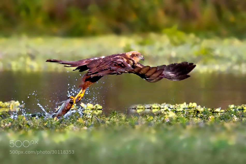 Photograph Catch of the Catch by Nitin  Prabhudesai on 500px