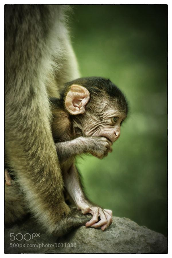 Love me tender ... by Veronique AUBOIS-MANN (verodoug) on 500px.com