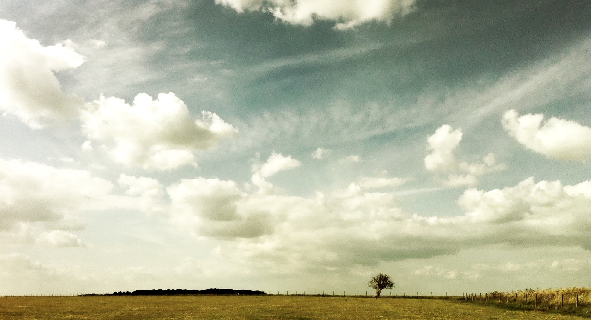 Photograph lonely tree by Joel Carvalho on 500px