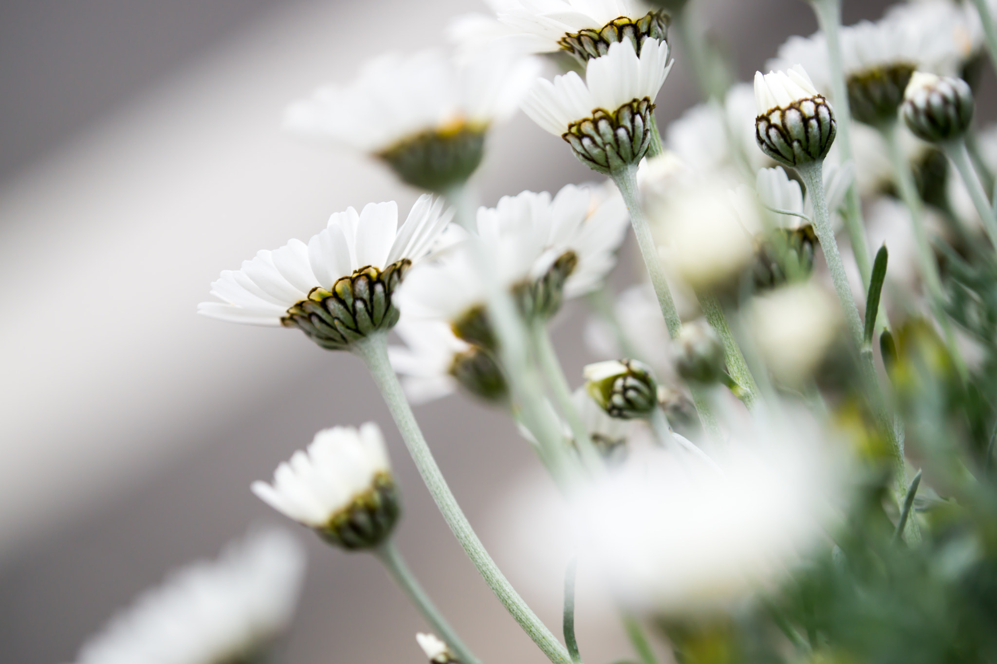 Photograph White flowers by marbee .info on 500px