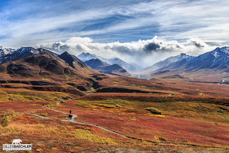 Photograph Fall in Denali by Gilles Baechler on 500px