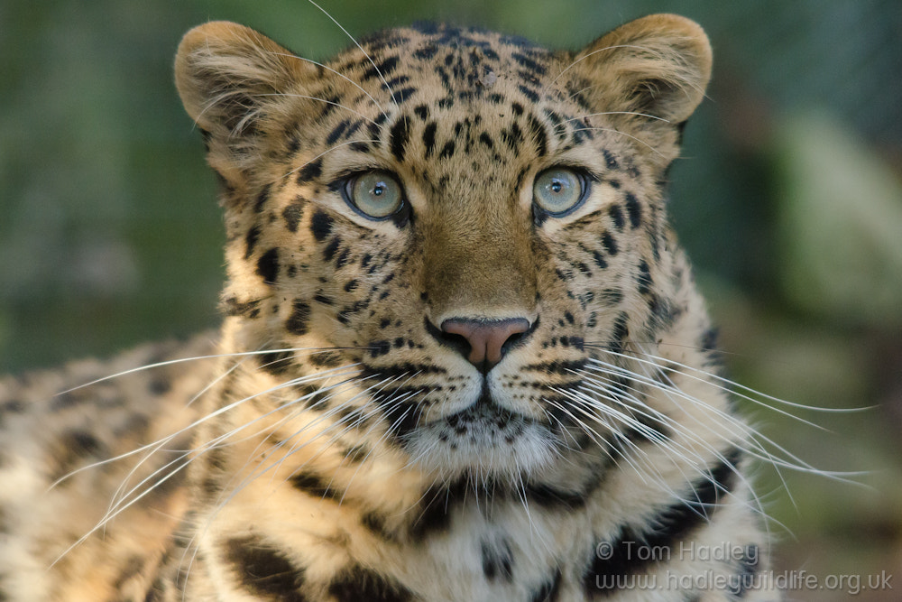 Photograph Kaia Portrait by Tom Hadley on 500px