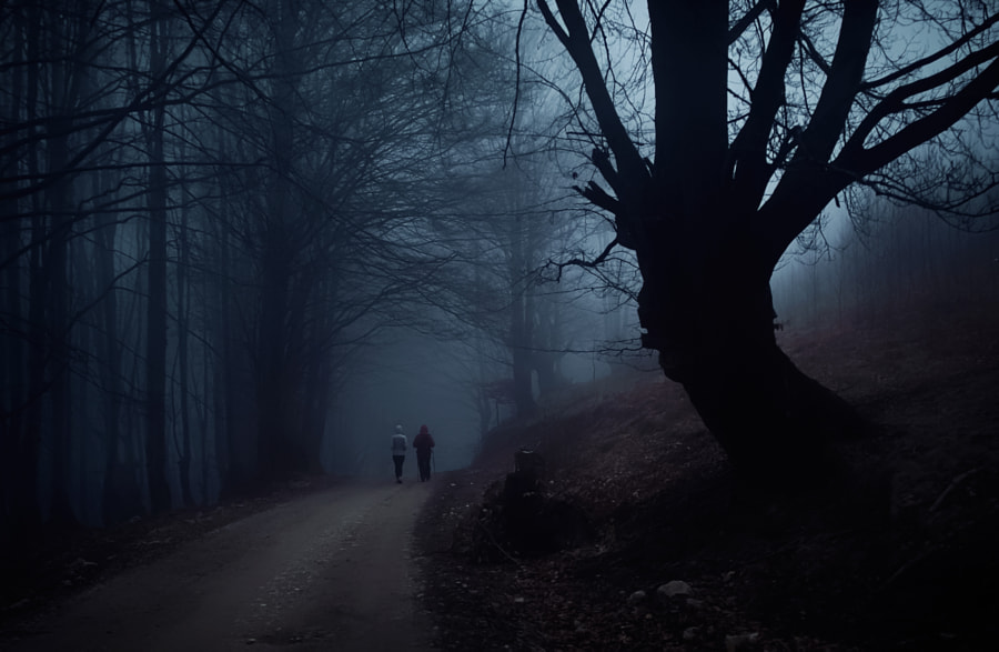 Dark forest 2 by Mugurel Motea on 500px.com