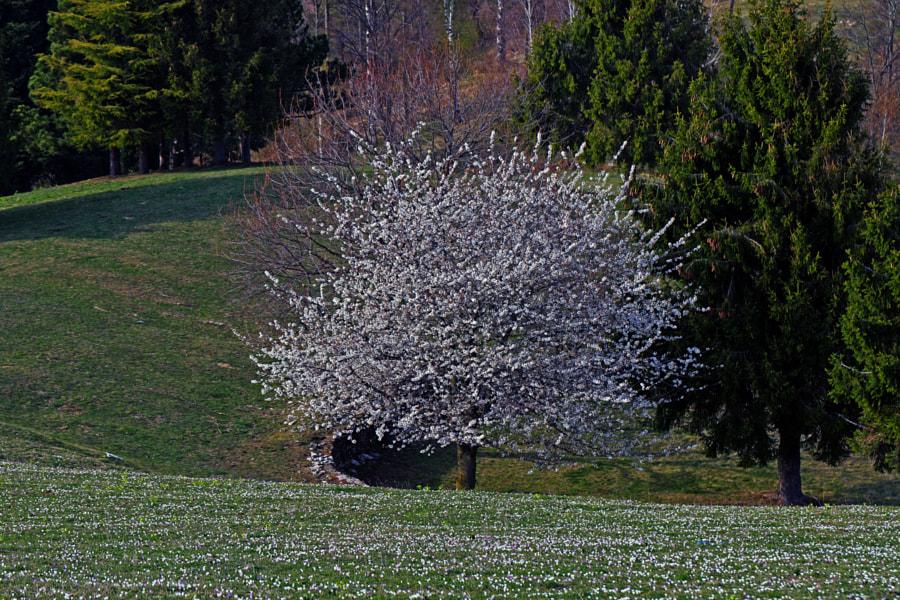 Springtime by umberto martinenghi on 500px.com