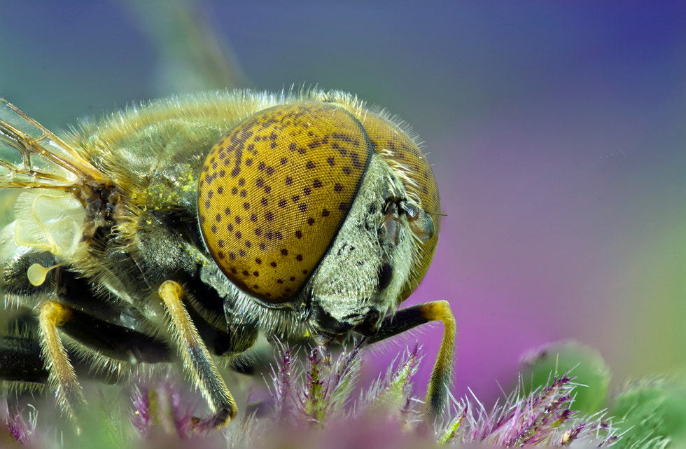 Photograph bee by giray kocaman on 500px