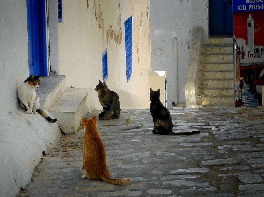 waiting for... by Jerzy Zieliński on 500px.com