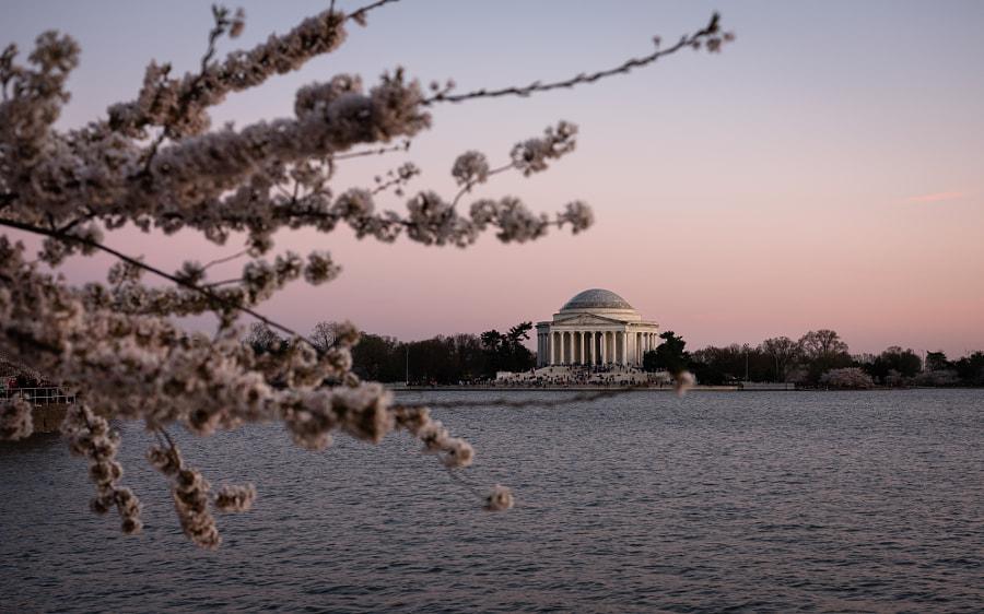 Cherry Blossom by Sobhi Dimachkieh on 500px.com
