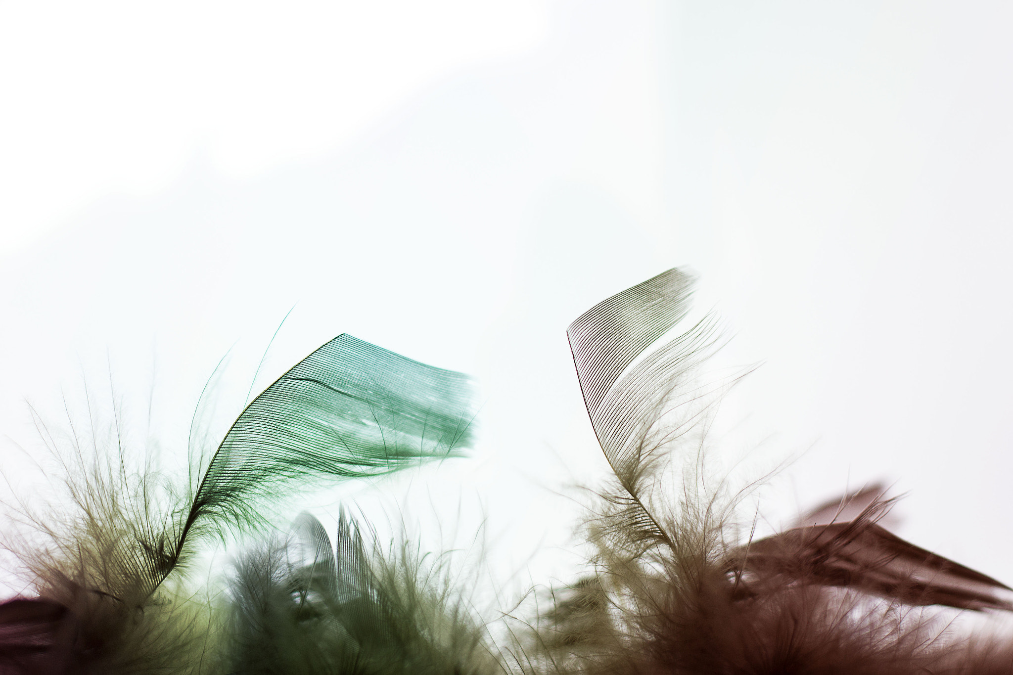 Photograph Colorful Feather 1 by Lorenz B. on 500px