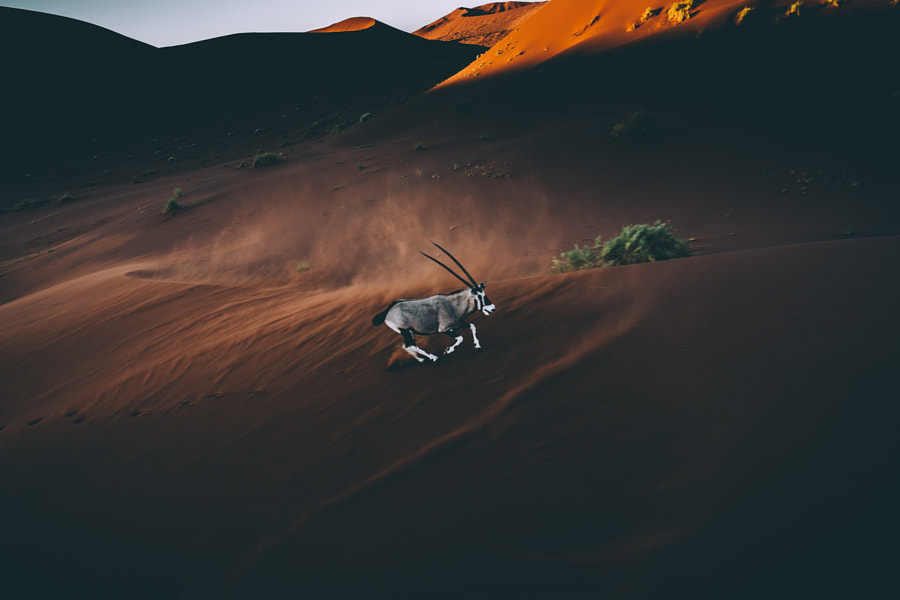 Oryx by Tobias Hägg on 500px.com