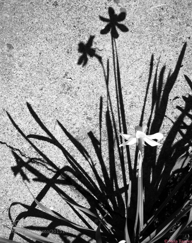 Photograph Shadows by Stela Taneva on 500px