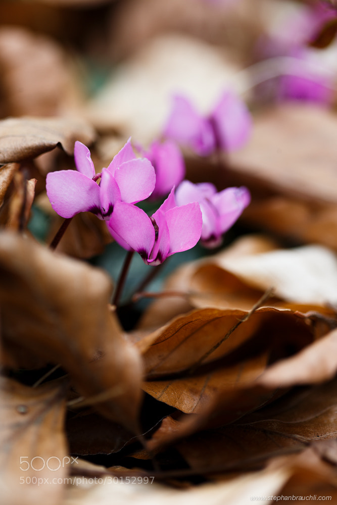 Photograph Spring on Fall by Stephan Brauchli on 500px